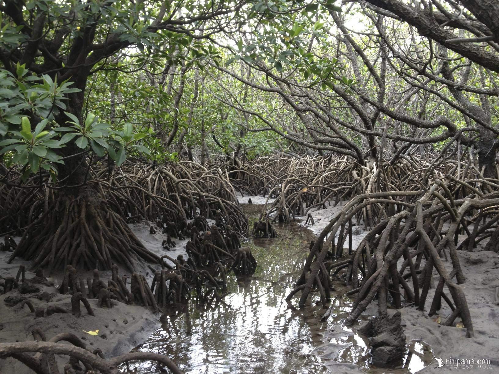 マングローブ林の裏側には何があるの?
