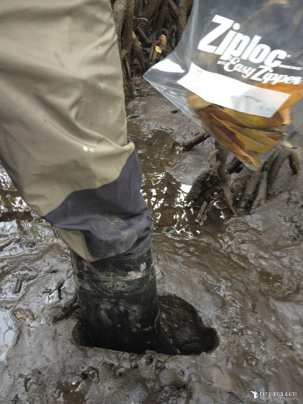 マングローブ調査で長靴が埋る