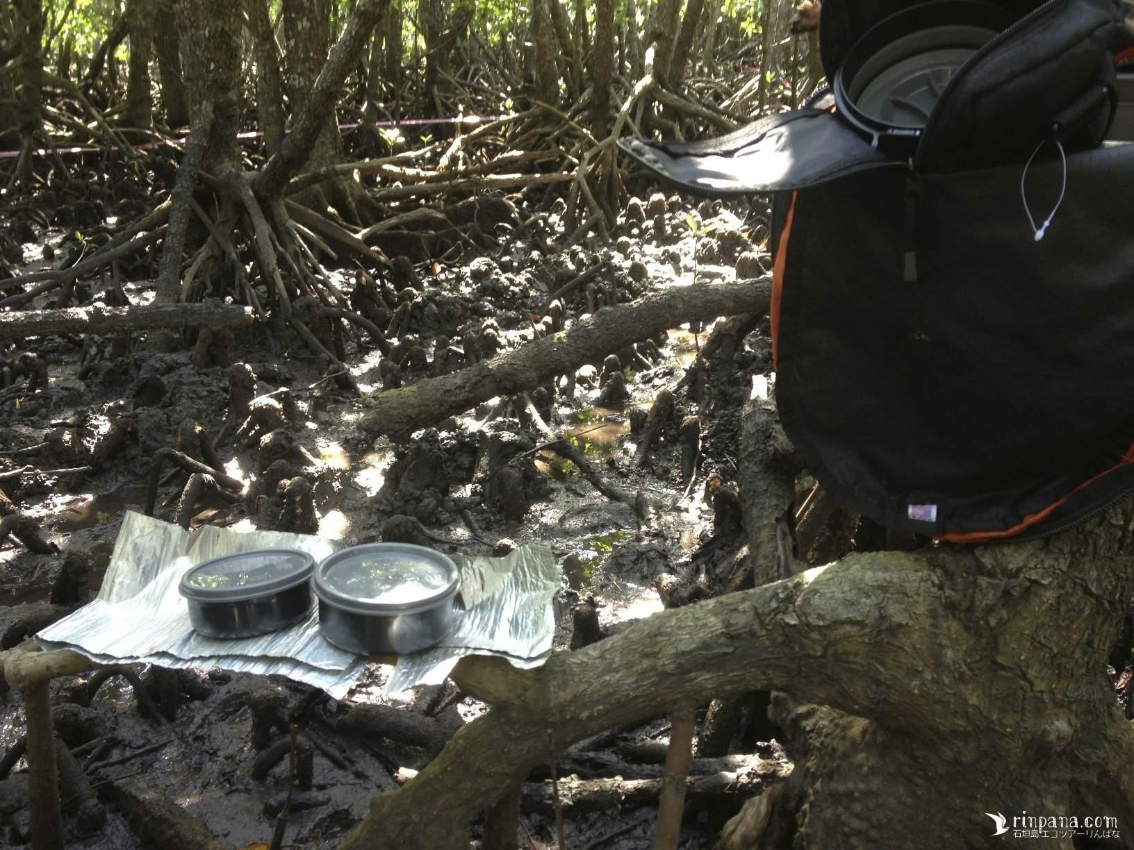 マングローブ林でお弁当