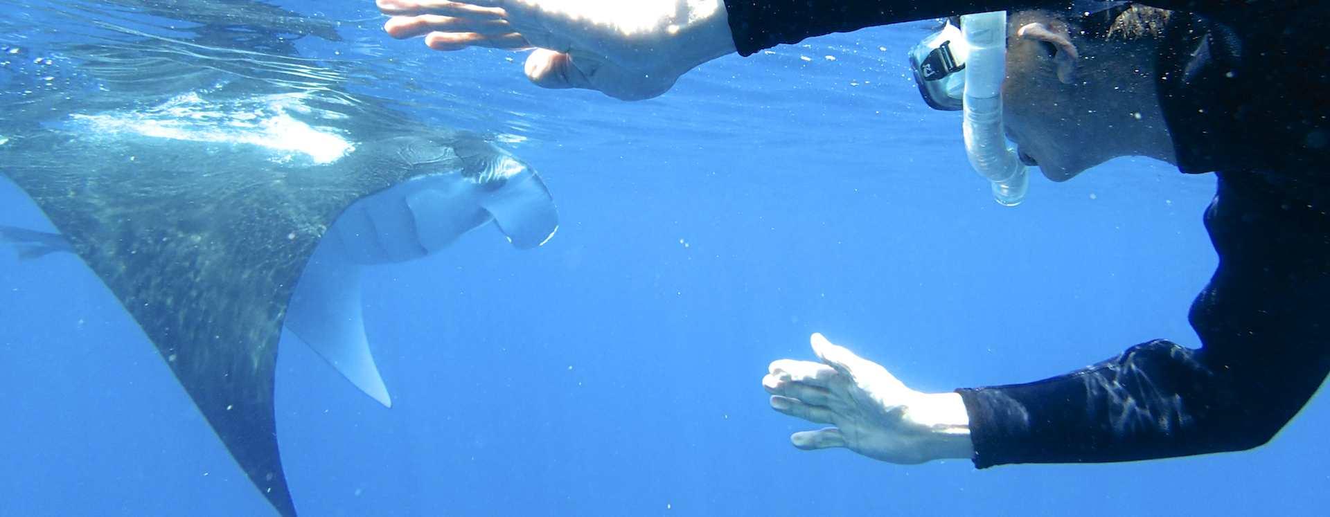 水面でプランクトンを補食するマンタを見るシュノーケラー