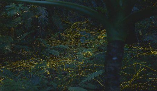石垣島のホタルツアーの写真集