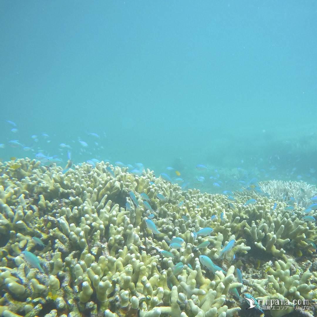 カヌーでサンゴ礁に行きシュノーケルする写真