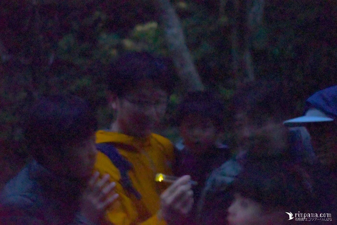 ホタルを見に森へ