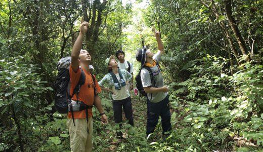 石垣島の森のエコツアーの写真・まとめ