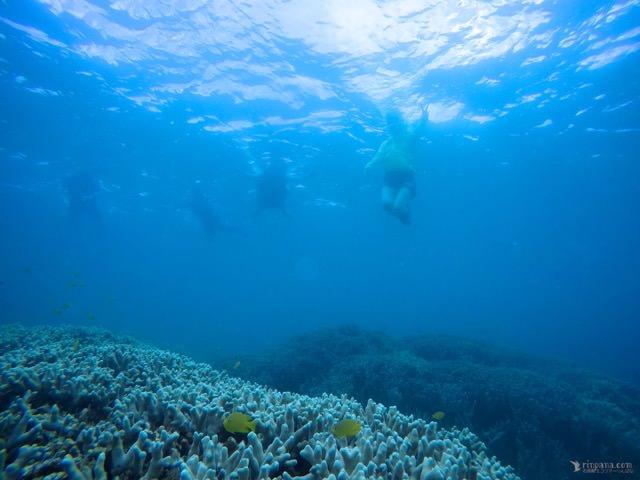 サンゴ礁をシュノーケルする