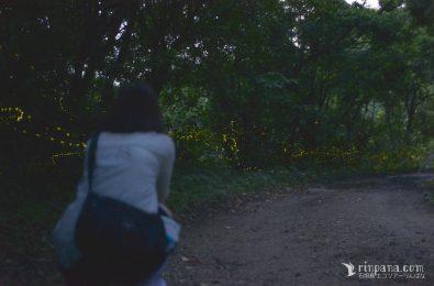 石垣島のホタルを見る参加者