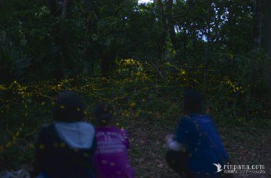 ヤエヤマヒメボタルを見るツアー参加者