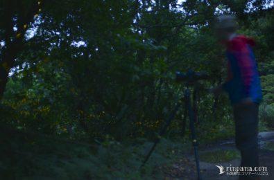 ヤエヤマヒメボタルの撮影風景