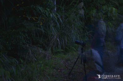 ホタルを撮影する参加者