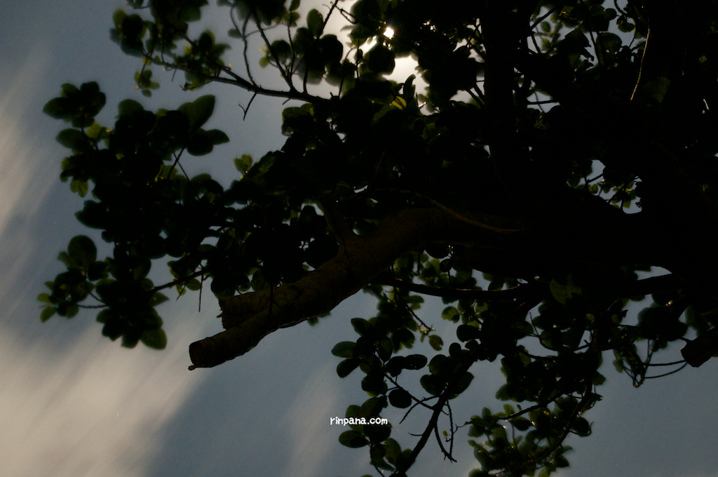 月に知らされた樹の声