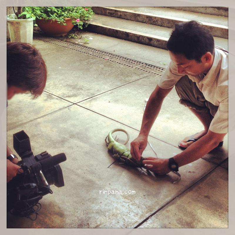 久しぶりのイグアナ捕獲。石垣島の外来種問題の取材に同行しました。