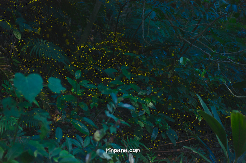 石垣島の夜を楽しむ、ホタルを見る、ナイトツアー