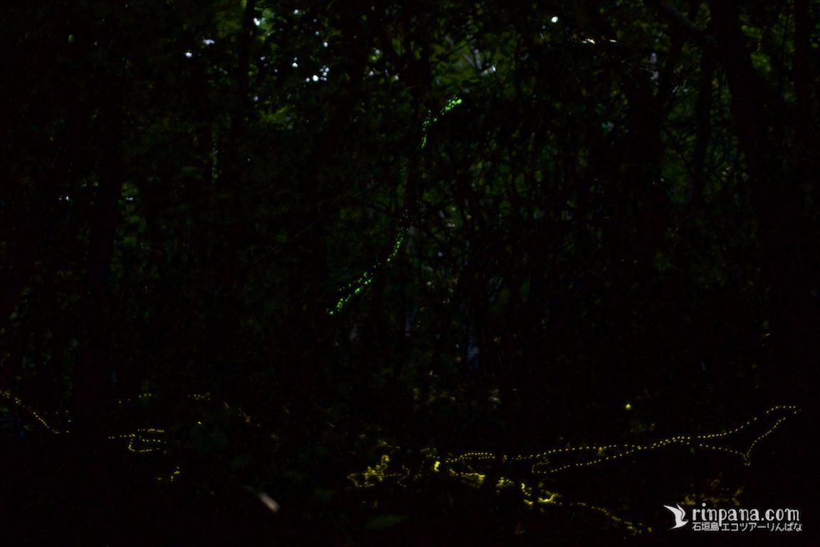 光るキノコとホタルツアー