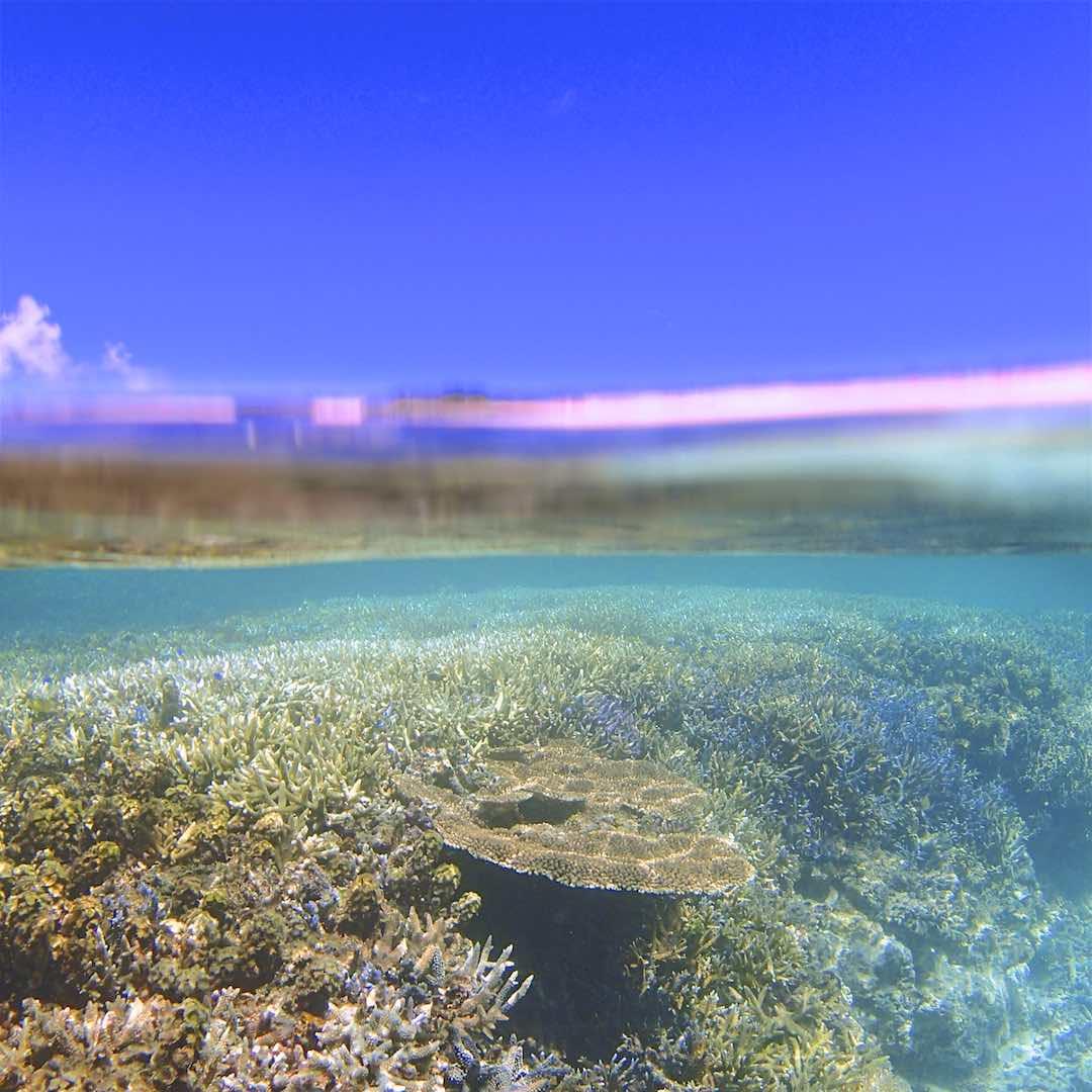 パナリのサンゴ礁をシュノーケルで見たところ