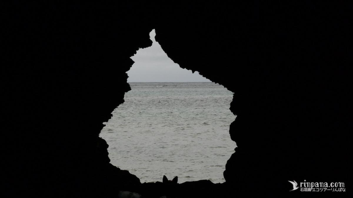 夏の新ツアーの下見に鍾乳洞へ行くと、ハリセンボンがいた!