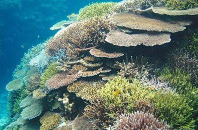 2008年頃の石垣島富野のサンゴ礁