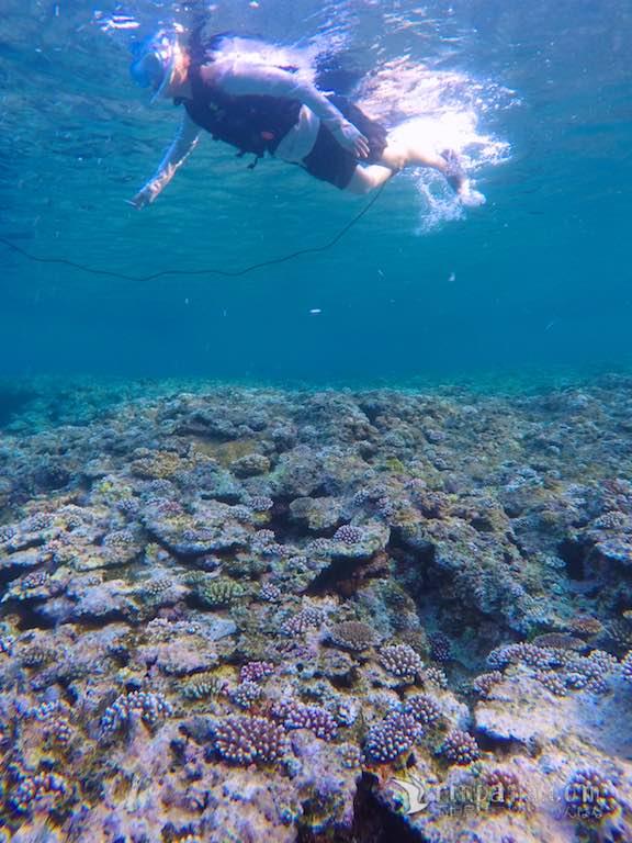 2017年の回復中のサンゴ礁