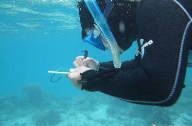サンゴ礁を調査する