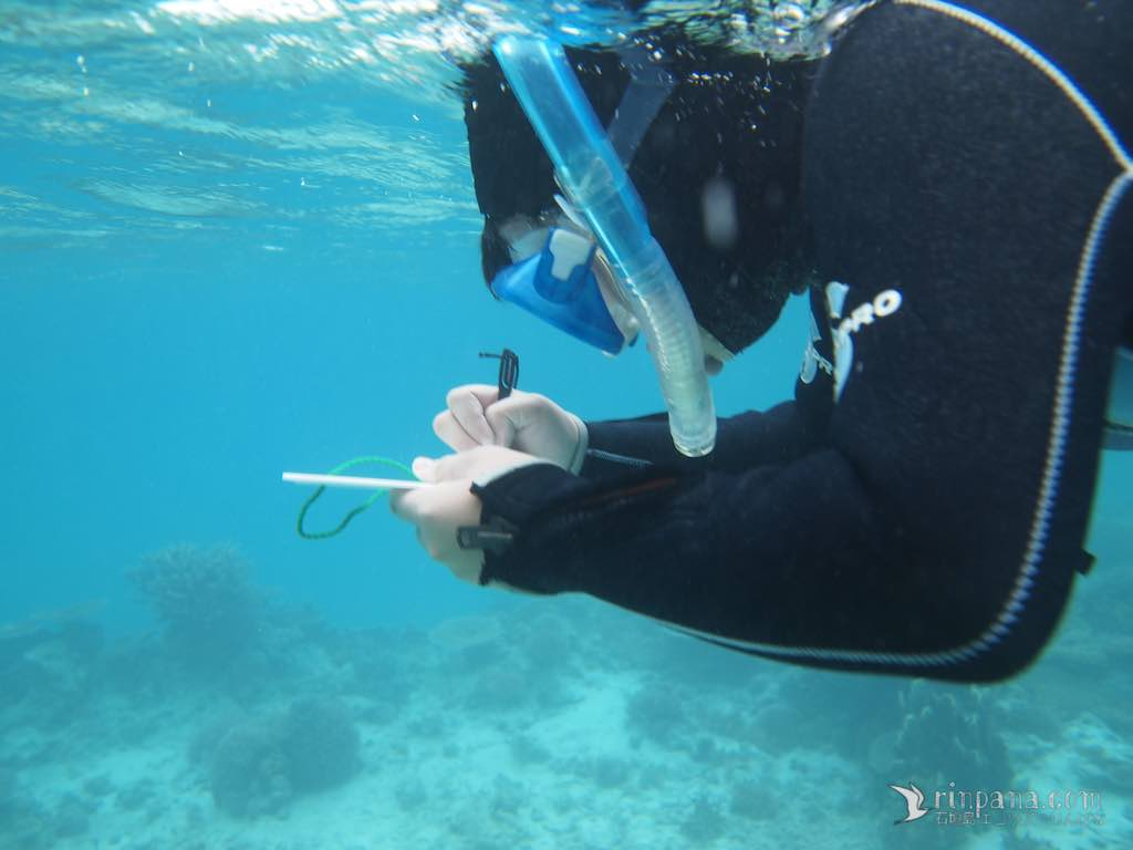 海で生きる、私の生き方。サンゴ礁調査・後編