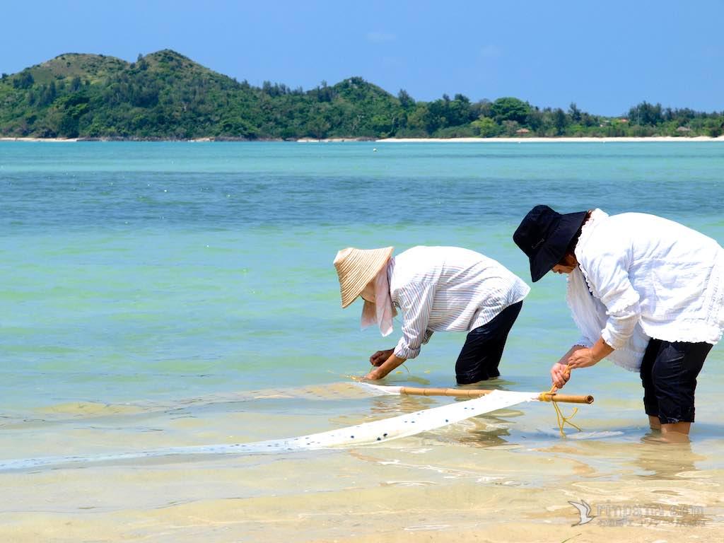 本当のきれいさとは何だろう。海の透明度を調べる市民活動
