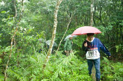 梅雨の石垣島の森