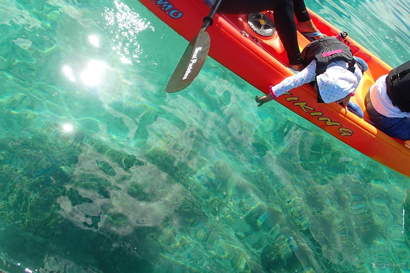 カヌーの上から海底のアオヒトデを指指す少女