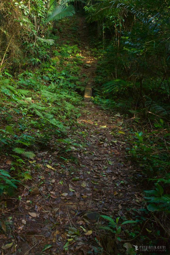 小さな木の渡しが架かる、細い一本道を登る
