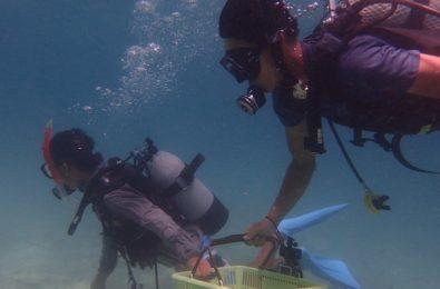 サンゴを移動するダイバー2