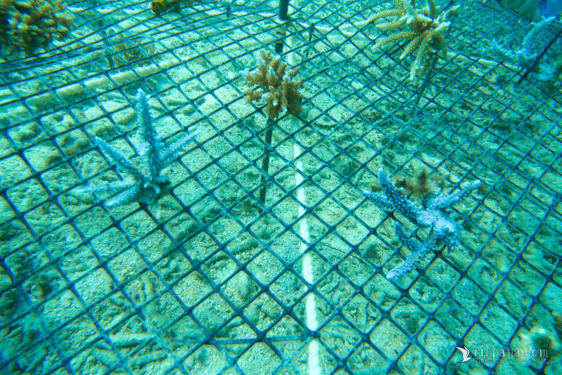 保護中: サンゴの写真
