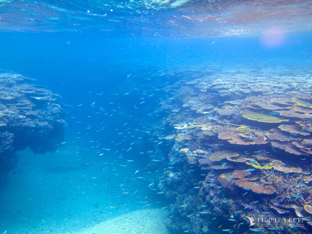 以前の美しいサンゴ礁