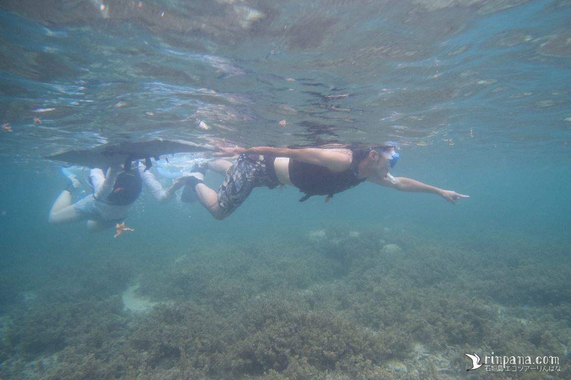 台風でSUPツアーが中止に..。替わりにサンゴ礁シュノーケルへ!