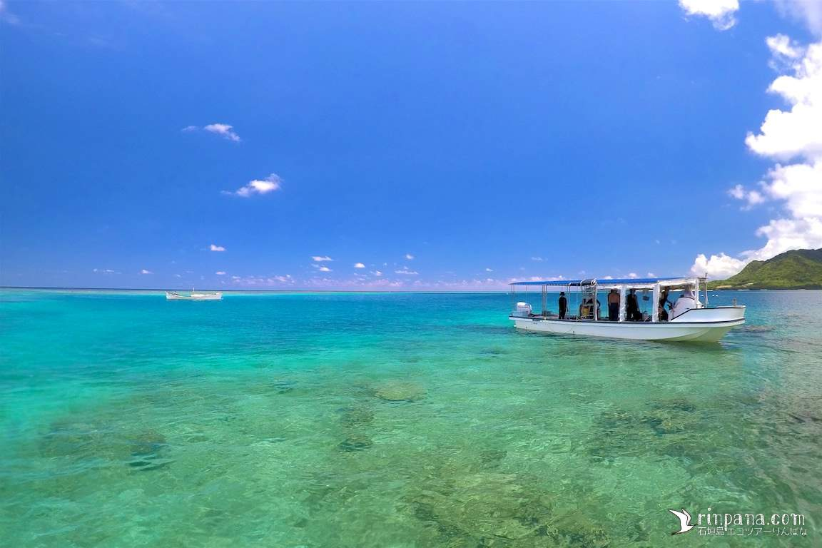 サンゴ礁保全の活動報告