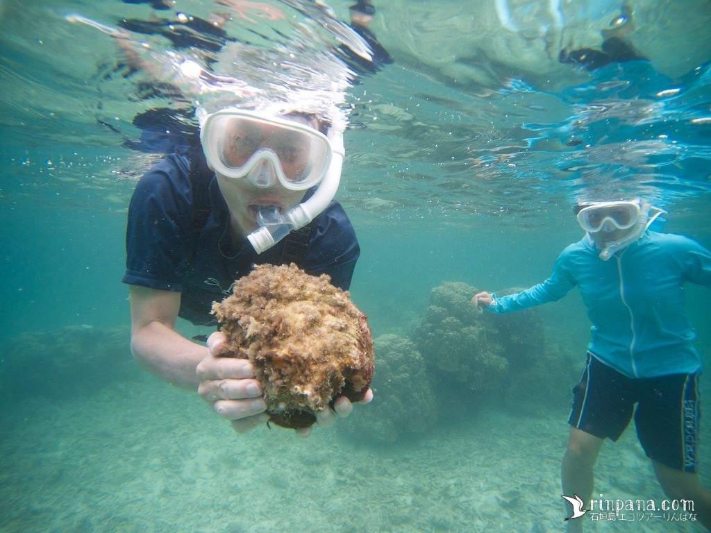 大きなシャゴウガイを手に泳ぐ