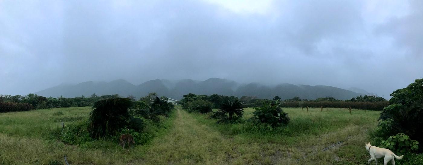 石垣島は雨期だから。長雨の影響があちこちに。
