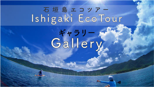 石垣島エコツアーギャラリー
