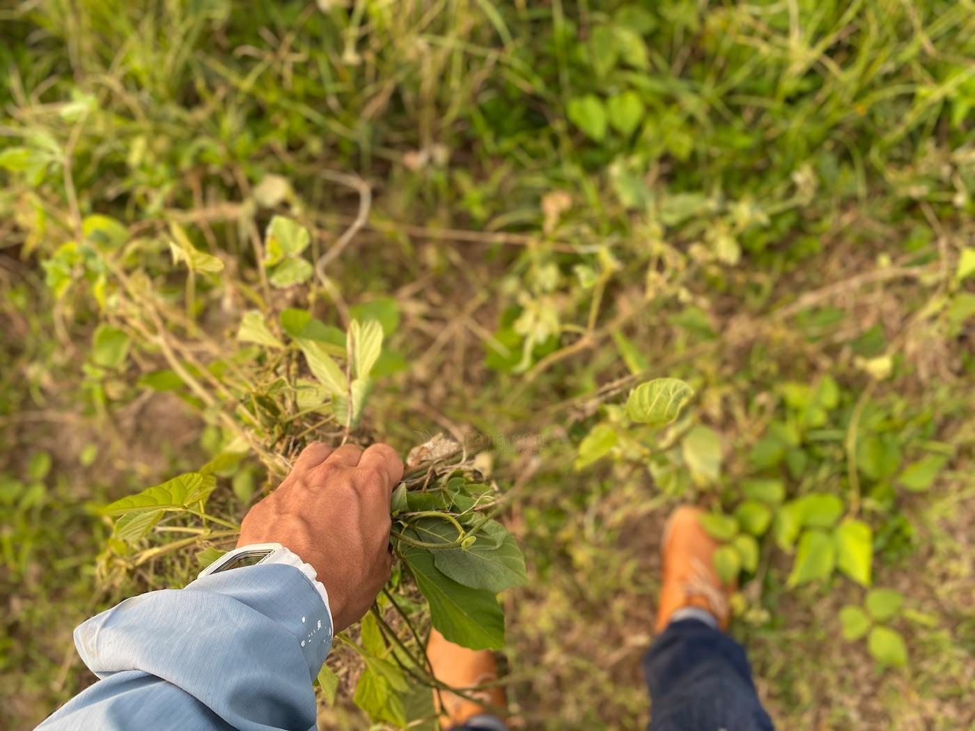 木を植えて、森をつくるために必要なこと