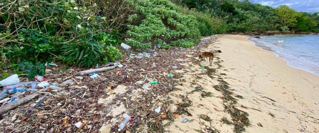 石垣島のビーチの漂着ゴミ