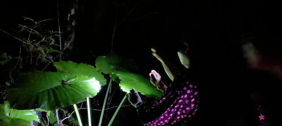 カエルを探すナイトツアー