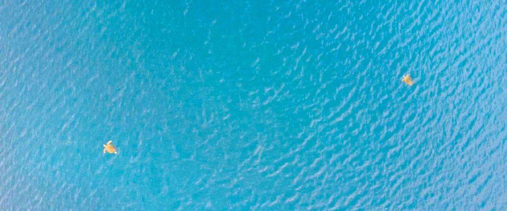 ドローンで撮影したウミガメ
