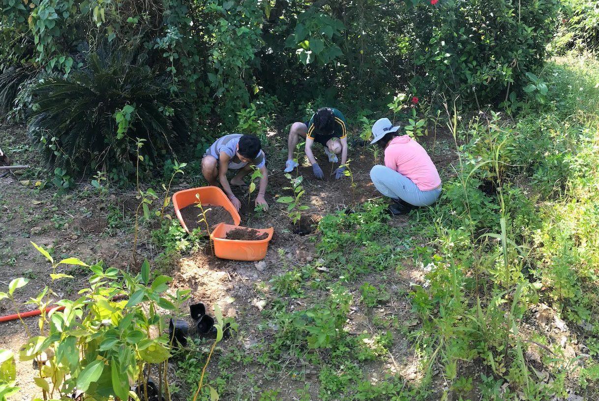 石垣島で木を植えている様子