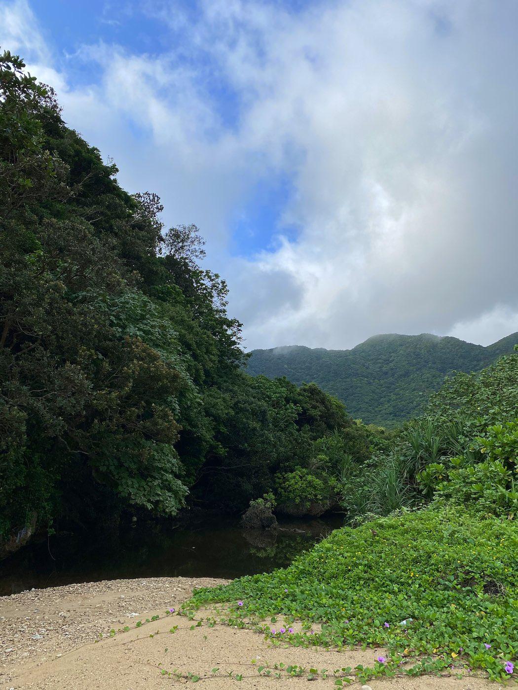 りんぱなのマングローブの川