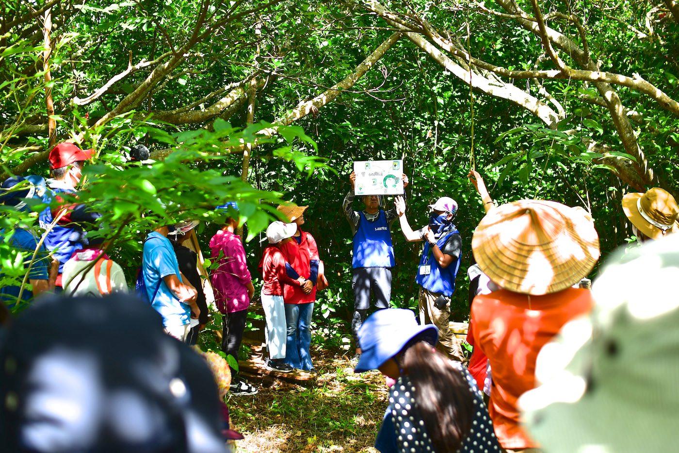 樹木環境ネットワーク協会とローソンの植樹の解説