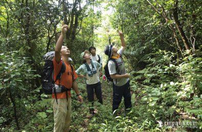 石垣島の森を歩いている写真
