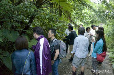 林道を歩くホタルツアー参加者