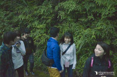 林道で植物を観察する参加者