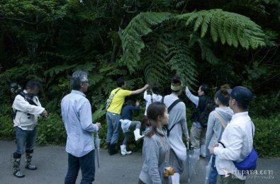 ホタルツアーの前に植物の解説