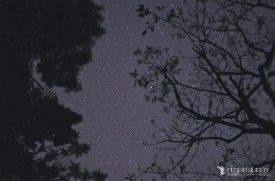 山の中で星空を見上げる