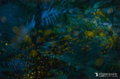 月明かりで撮るホタルの写真