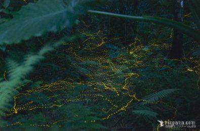 葉の間を縫うようにしてオスがメスを探している写真