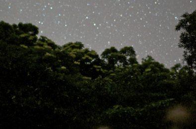 ホタルを見ながら星空を眺める写真